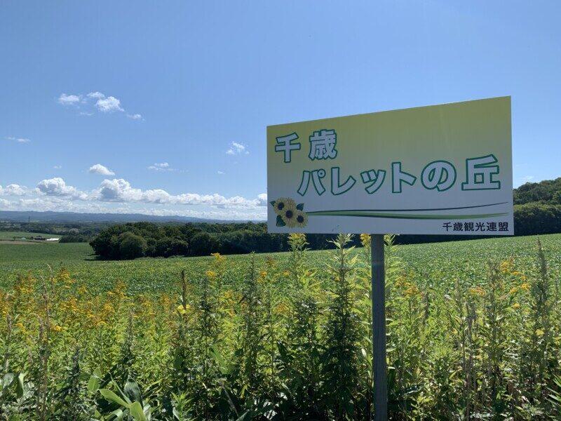 「パレットの丘」ひまわり生育・開花状況(9月3日)