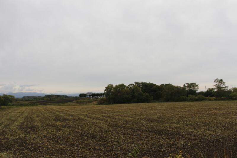 パレットの丘ひまわり畑の見頃終了について
